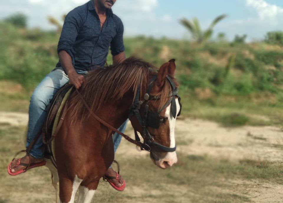 Horse Riding for pleasure
