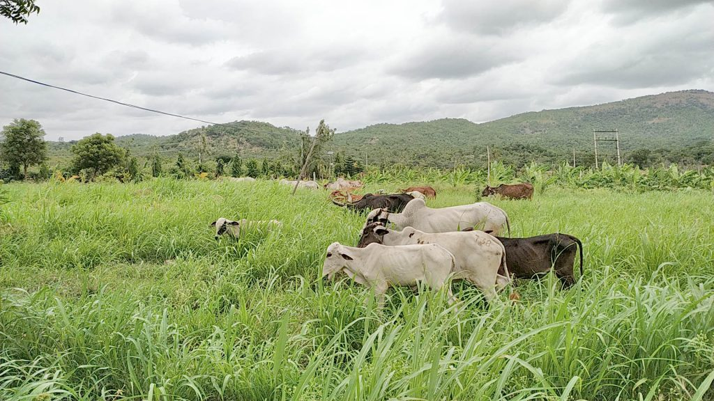 Farmstay near Bangalore